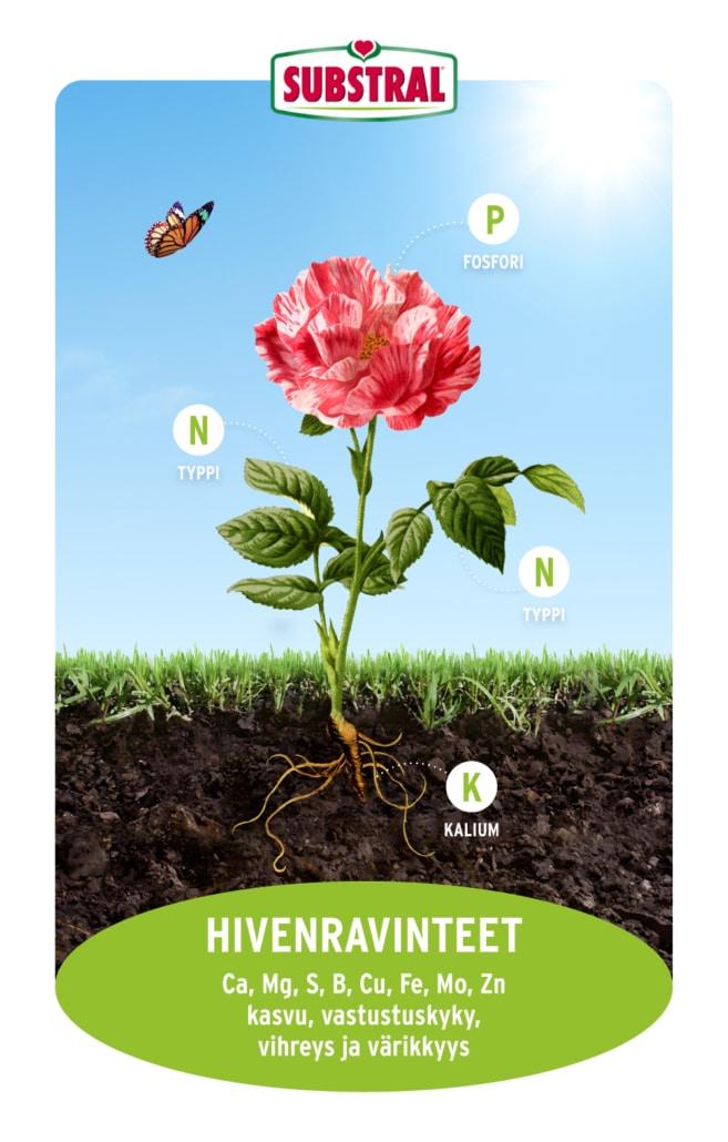 Mihin kasvien ravitseminen perustuu?