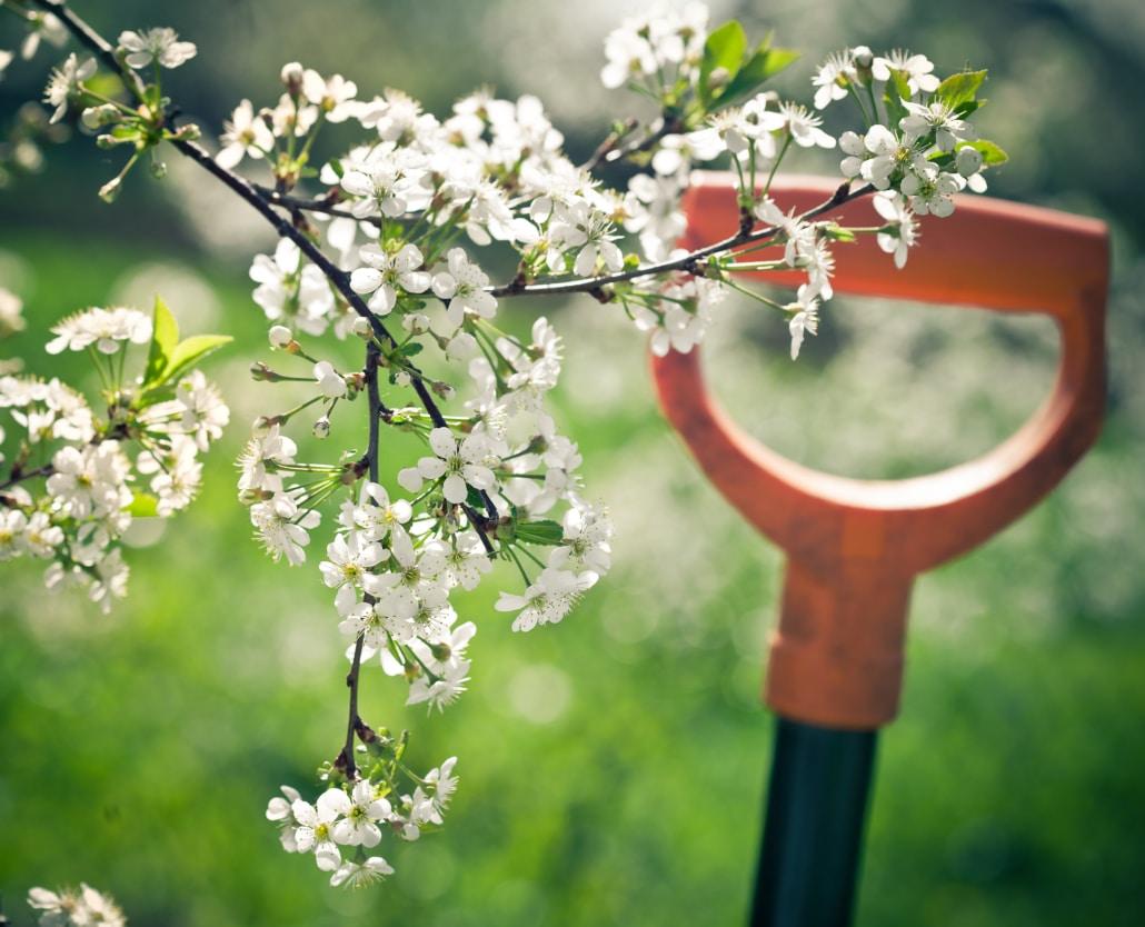 5 vinkkiä kevätpuutarhan hoitoon
