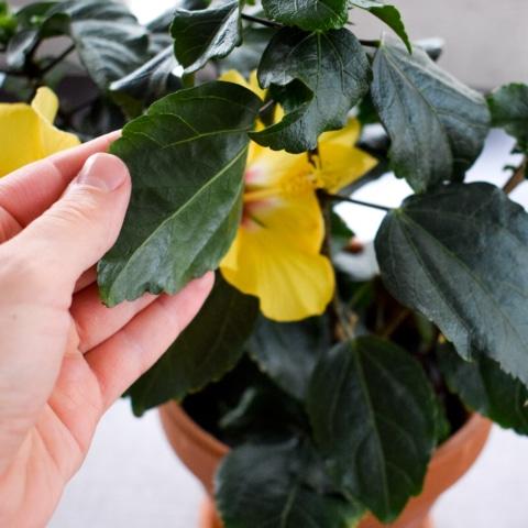 löydä kasvituholaiset